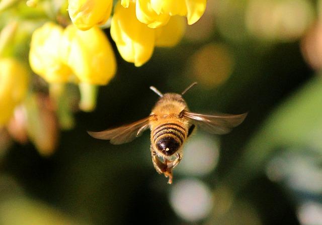 honey-bee-68166_640